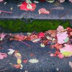10.14.16 - Fallen on Steps...